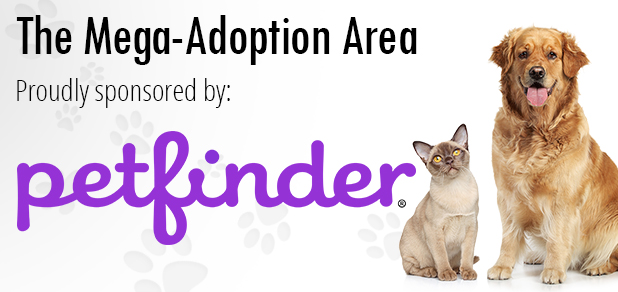 adoption_petfinder